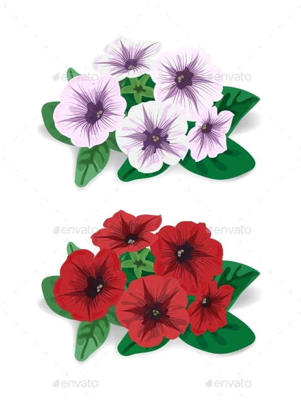 Petunia Flower - Flowers & Plants Nature