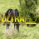 Horse on Green Meadow 1 - VideoHive Item for Sale