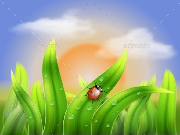 Ladybug and Grass on a Background Sunset - Landscapes Nature