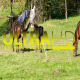 Horses on Green Meadow 1 - VideoHive Item for Sale