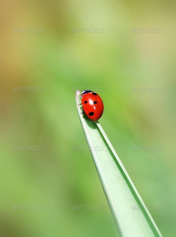 Ladybug - Stock Photo - Images