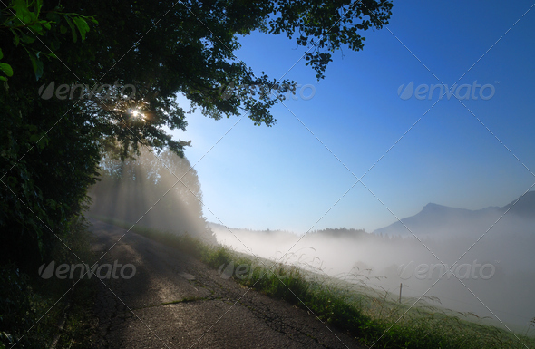 Morning fog - Stock Photo - Images