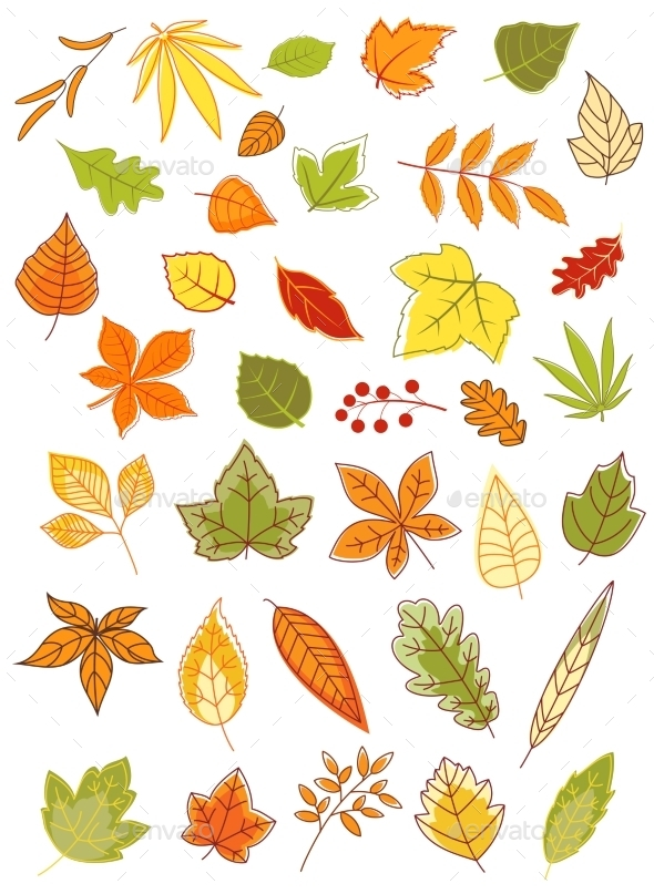 Autumn Leaves - Seasons Nature
