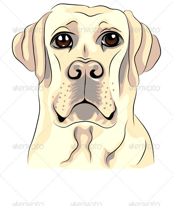 Vector Color Sketch Dog Breed Labrador Retrievers - Animals Characters