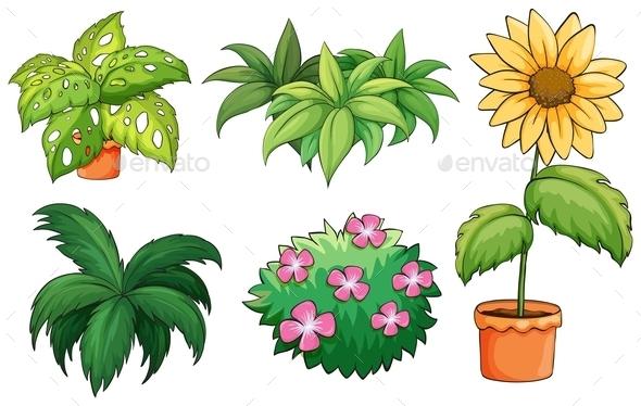 Flowerpots and Plants - Flowers & Plants Nature