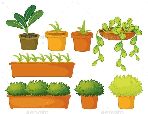 Various Plants and Pots - Flowers & Plants Nature