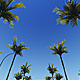 Driving Through Palm Trees (2-Pack) - VideoHive Item for Sale