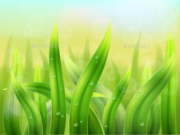 Grass Background - Nature Conceptual