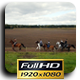 Horse Riding Aerial Shots (4 Pack) - VideoHive Item for Sale
