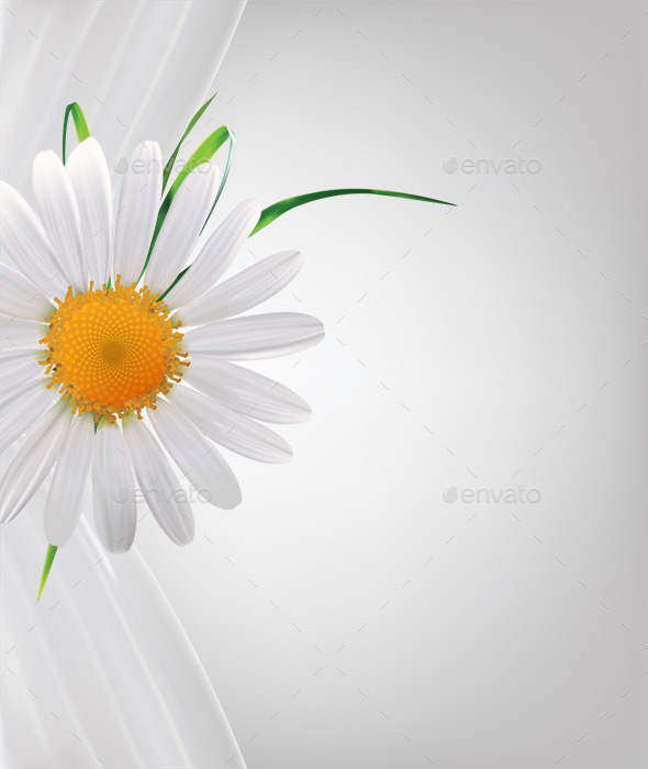 Daisy Background - Backgrounds Decorative