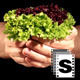 Hands Holding Vegetables - VideoHive Item for Sale