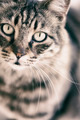 Portrait of Cat - PhotoDune Item for Sale