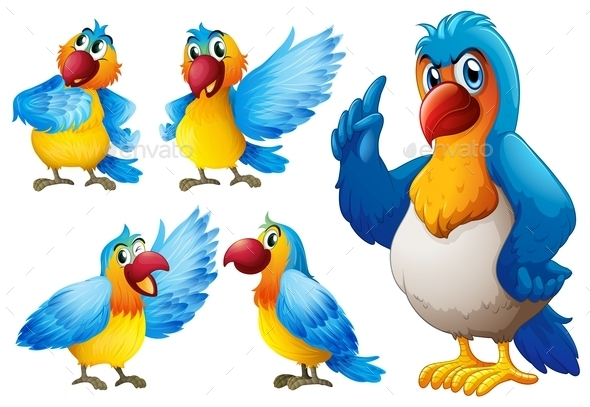 Parrot Set - Animals Characters
