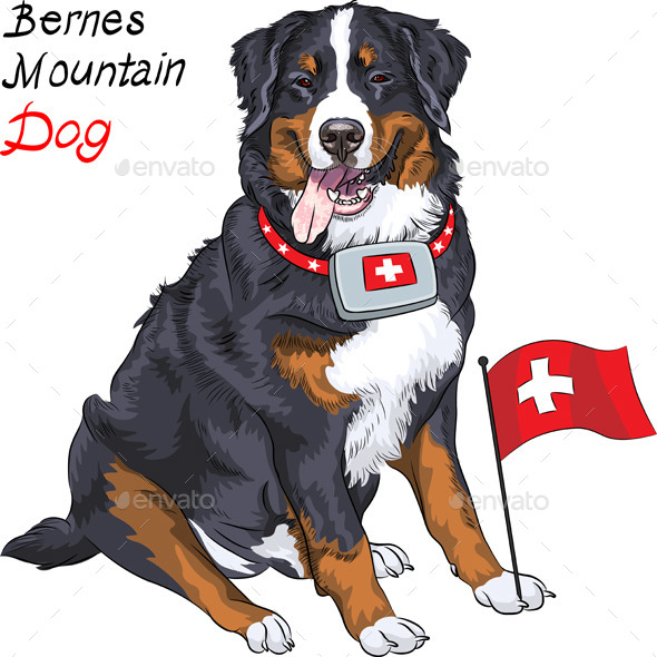 Bernese Mountain Dog with a First Aid Kit  - Animals Characters