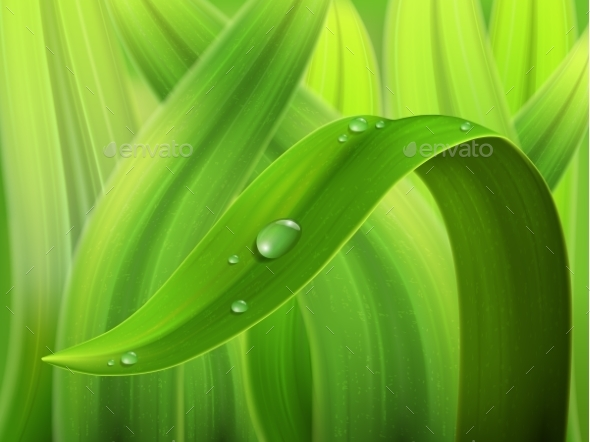 Water Drop on Grass Macro - Nature Conceptual