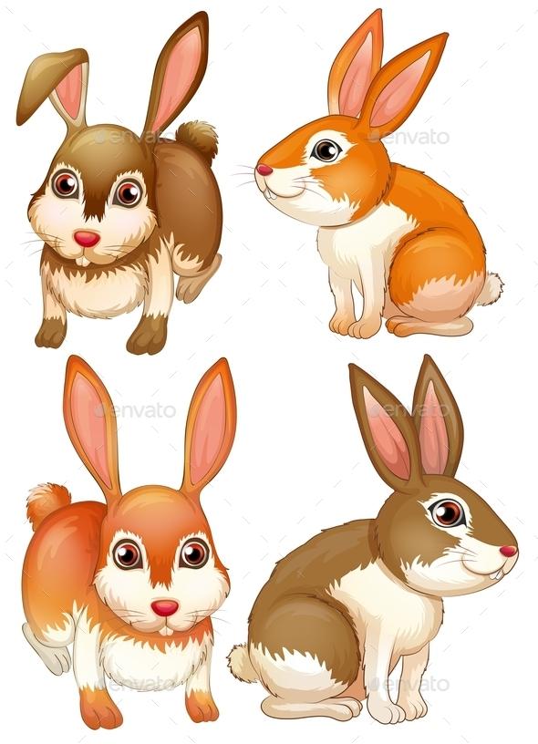 Rabbits - Animals Characters