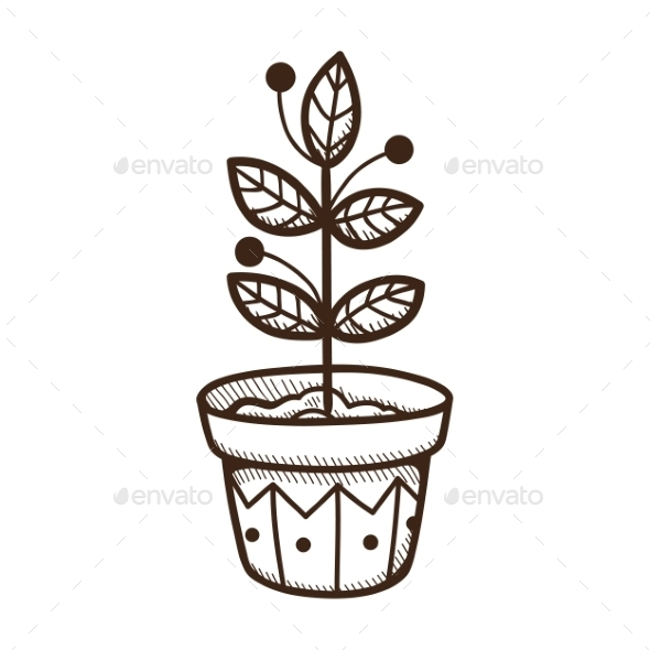 Plant Growing in a Pot. - Nature Conceptual