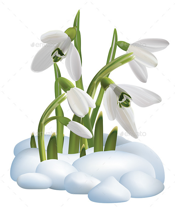 Spring Snowdrop Flowers on a Snow - Flowers & Plants Nature