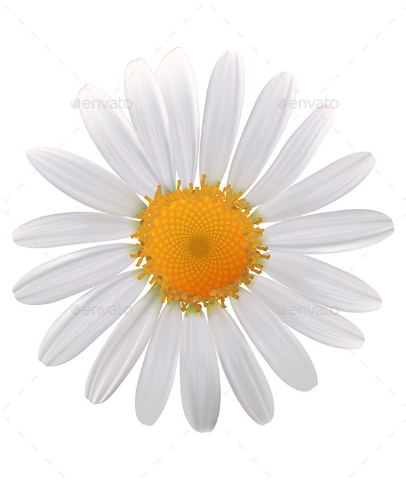 Daisy Flower - Flowers & Plants Nature