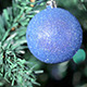 Blue Ball On Christmas Tree - VideoHive Item for Sale
