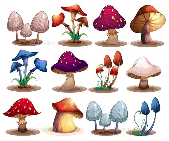 Mushroom Set - Nature Conceptual