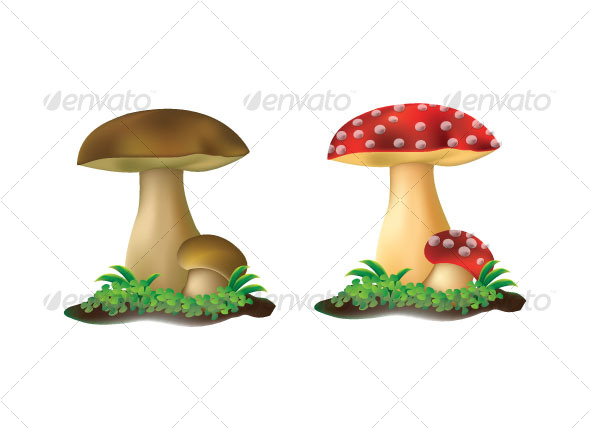 Two mushroom  - Organic Objects Objects