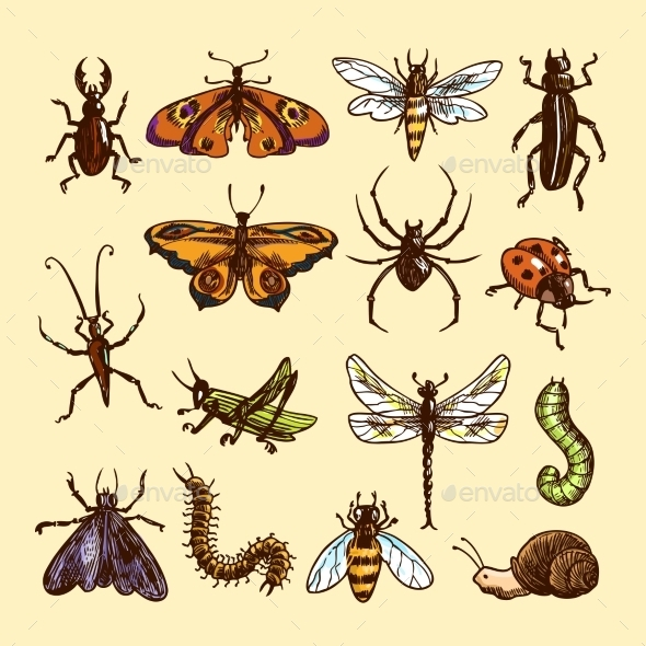 Insects Sketch Set - Animals Characters