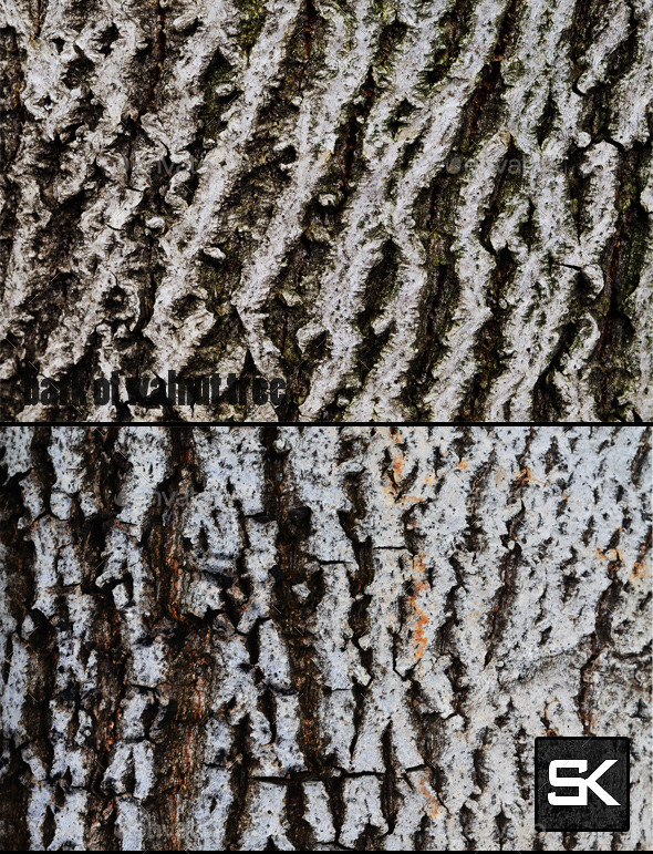 Bark Of Walnut Tree - Wood Textures