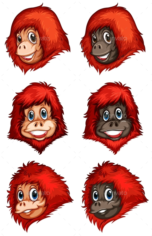 Heads of Chimpanzees - Animals Characters