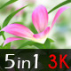 Wonderful Flowers - VideoHive Item for Sale