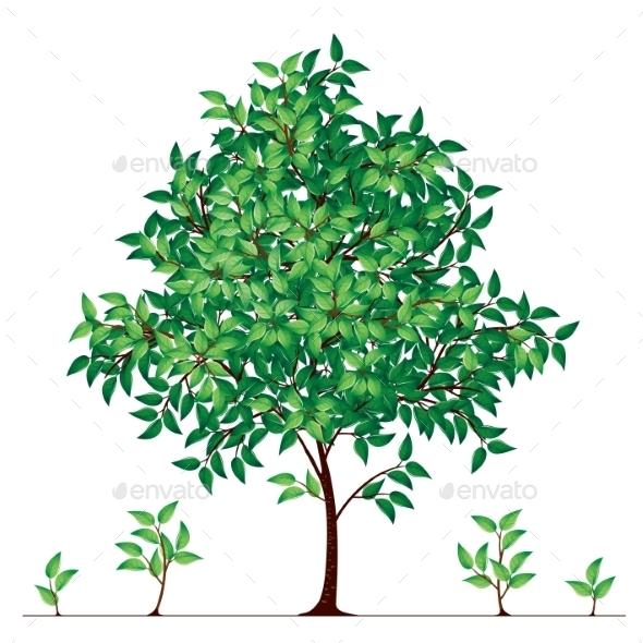 Tree - Flowers & Plants Nature