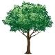Foliage Tree - GraphicRiver Item for Sale