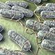 Salmonella Bacteria - VideoHive Item for Sale