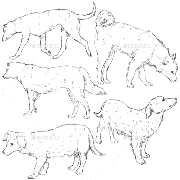 Vector Set of Sketch Dogs - Animals Characters