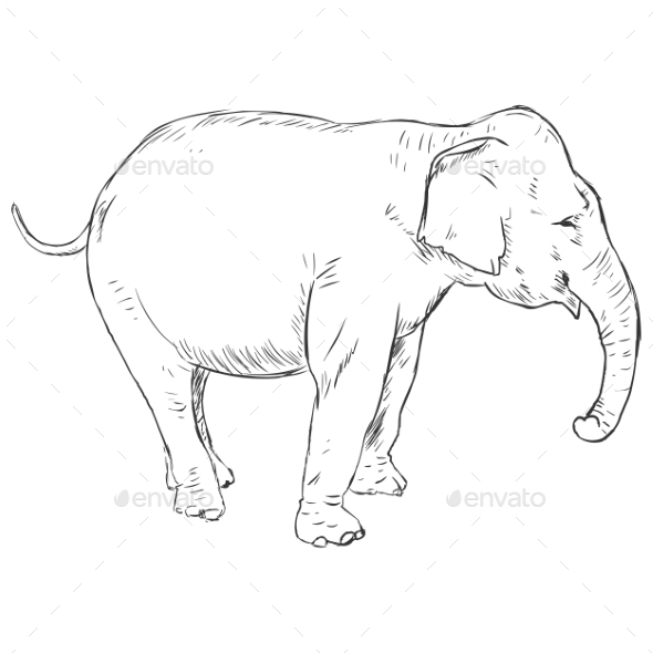 Vector Sketch Elephant - Animals Characters