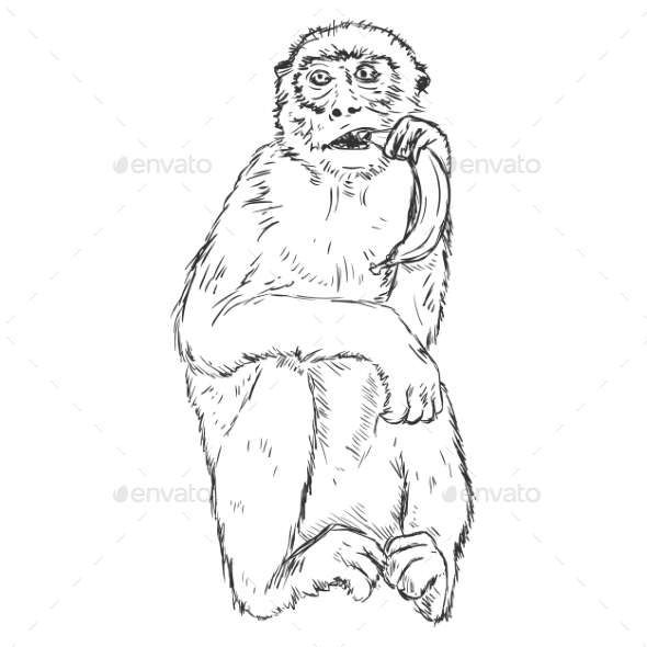 Vector Sketch Monkey with a Banana - Animals Characters