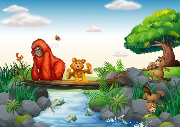 Animals  - Animals Characters