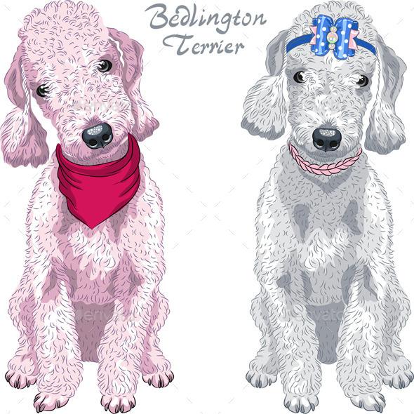 Bedlington Terrier Breed - Animals Characters