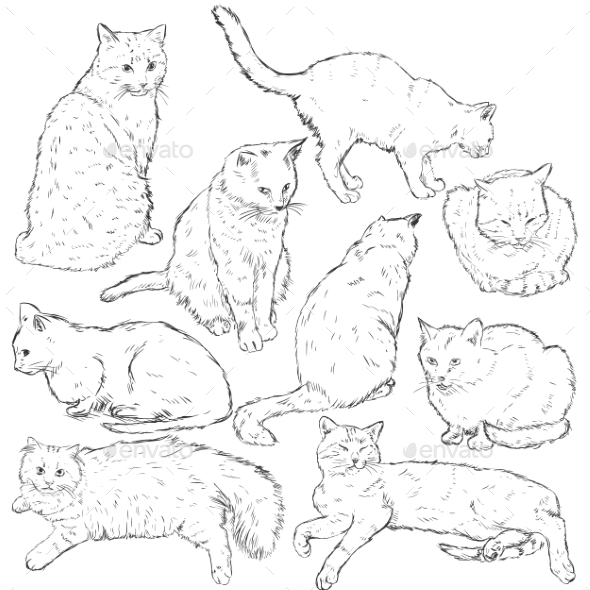 Cats - Animals Characters