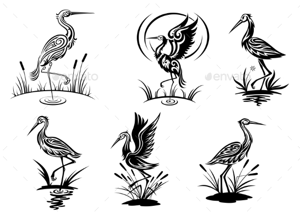 Stork Birds - Animals Characters