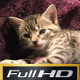 Kitten Falling Asleep - VideoHive Item for Sale