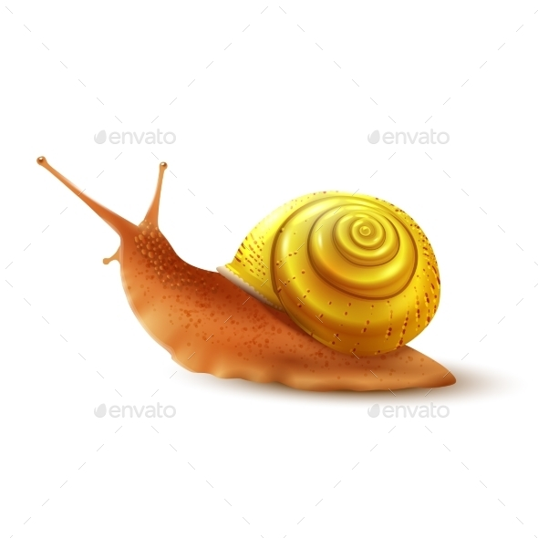 Snail - Animals Characters