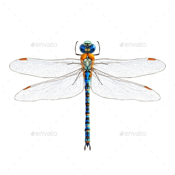 Dragonfly  - Seasons Nature