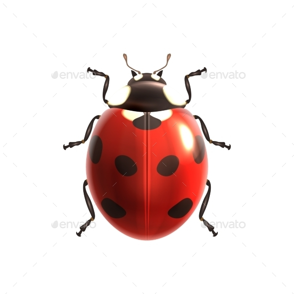 Ladybug - Seasons Nature
