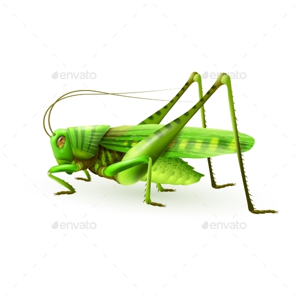 Grasshopper - Animals Characters