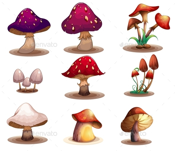Different Kinds of Mushrooms - Food Objects