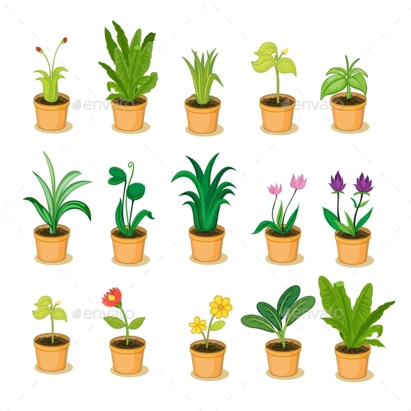 Plant Collection - Flowers & Plants Nature