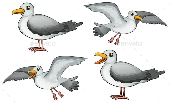 Four Birds - Animals Characters