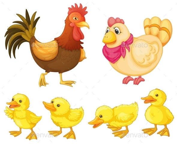 Chicken Family - Animals Characters