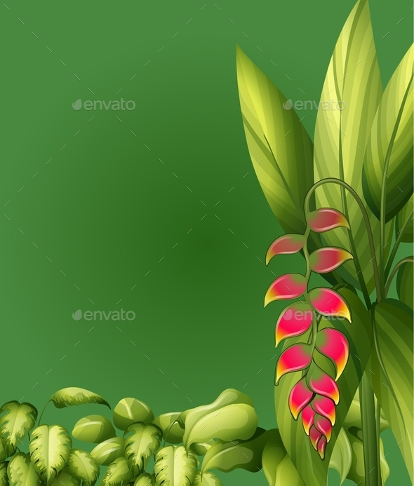 Plants with Elliptic Leaves - Flowers & Plants Nature